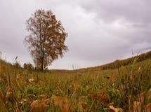 Mooie de herfstboom Royalty-vrije Stock Fotografie