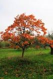 Mooie de herfstboom royalty-vrije stock foto's
