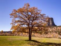 Mooie de herfstboom met Duivelstoren op de achtergrond Stock Foto