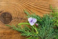 Mooie de herfstsamenstelling op houten achtergrond Stock Fotografie