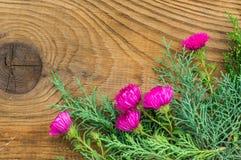 Mooie de herfstsamenstelling op houten achtergrond Royalty-vrije Stock Fotografie