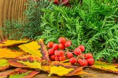 Mooie de herfstsamenstelling op houten achtergrond Stock Afbeeldingen