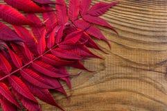 Mooie de herfstsamenstelling op houten achtergrond Royalty-vrije Stock Foto