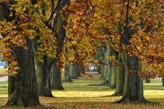 Mooie de herfststeeg in Gdynia, Polen royalty-vrije stock foto