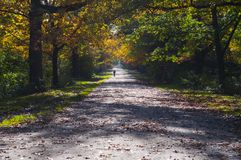 Mooie de herfststeeg in zonnige dag stock afbeelding