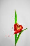Mooie de leliebloem van de hartvorm Royalty-vrije Stock Fotografie