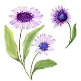 Mooie de lente bloemenillustratie Purper madeliefje stock illustratie