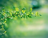 Mooie de lentebladeren Stock Afbeeldingen