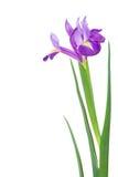 Mooie de lentebloemen Royalty-vrije Stock Afbeelding
