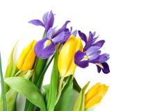 Mooie de lentebloemen Stock Foto's