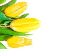 Mooie de lentebloemen Stock Foto
