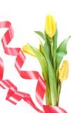 Mooie de lentebloemen Royalty-vrije Stock Afbeeldingen