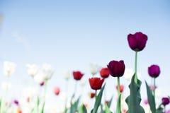 Mooie de lentebloemen Stock Afbeelding