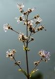 Mooie de lentebloemen Royalty-vrije Stock Foto's