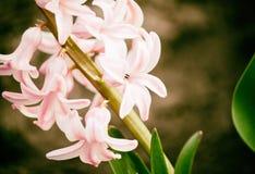 Mooie de lentebloemen in de tuin Stock Afbeeldingen