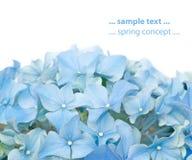 Mooie de lenteflora Stock Afbeeldingen