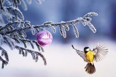 Mooie de meesvliegen van de Kerstkaartvogel aan een tak van feestelijk royalty-vrije stock fotografie