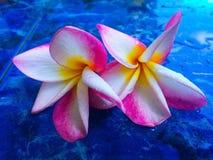 Mooie de meningsvakantie Koh Tao Thailand van het zonsondergangstrand Royalty-vrije Stock Afbeelding