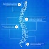 Mooie de stekelmens van de chronologie infographic dokter op de blauwdrukachtergrond Schone en elegante stijl vector illustratie