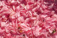 mooie de tederheidstextuur van de achtergrondbloemenlente royalty-vrije stock fotografie