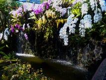 Mooie de tuinlevensstijl Thailand van de orchideeënbloem Stock Fotografie