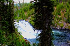 Mooie de watervalkreek of stroom van het Yellowstone Nationale Park onder de bossen royalty-vrije stock fotografie