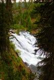 Mooie de watervalkreek of stroom van het Yellowstone Nationale Park onder de bossen stock fotografie