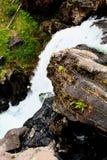 Mooie de watervalkreek of stroom van het Yellowstone Nationale Park onder de bossen royalty-vrije stock afbeeldingen