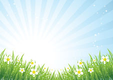 Mooie de weide van de lente Royalty-vrije Stock Afbeeldingen