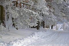Mooie de winter Stock Afbeelding