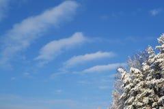 Mooie de winter Royalty-vrije Stock Foto's