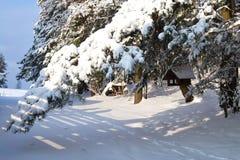 Mooie de winter Stock Afbeeldingen