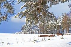 Mooie de winter Royalty-vrije Stock Fotografie