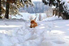 Mooie de winter Stock Foto