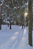 Mooie de winter Stock Foto's