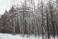 Mooie de winter bos Snow-covered weg in het bos Stock Afbeeldingen
