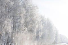 Mooie de winter witte sneeuw met sneeuw op boomtakken stock afbeelding
