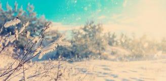 Mooie de winterachtergrond Royalty-vrije Stock Afbeeldingen