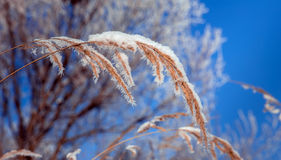 Mooie de winterachtergrond Stock Afbeeldingen