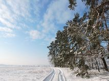 Mooie de winterbomen, gebied en eenvoudige manier, Litouwen Stock Afbeelding