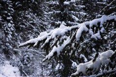 Mooie de Winterscène in het Dolomiet in Val di Fiemme, Trento Stock Fotografie