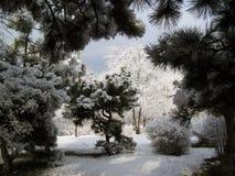 Mooie de winterscène van een park in zonnige dag stock foto's
