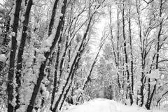 Mooie de winterweg in het bos Royalty-vrije Stock Fotografie