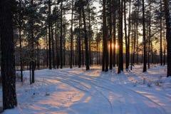 Mooie de winterzonsondergang met bomen in de sneeuw Royalty-vrije Stock Foto