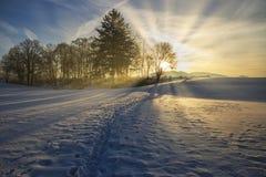 Mooie de winterzonsondergang met bomen in de sneeuw stock foto's