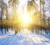 Mooie de winterzonsondergang met bomen in sneeuw Stock Afbeeldingen
