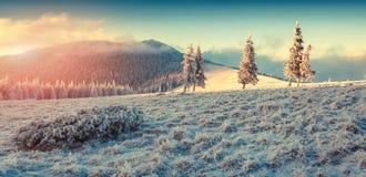 Mooie de winterzonsopgang in de bergen Stock Afbeelding