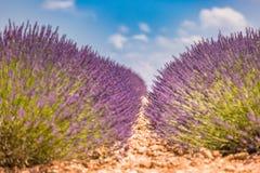 Mooie de zomeraard Het landschap van de de zomerzonsondergang van het lavendelgebied dichtbij Valensole De Provence, Frankrijk stock foto