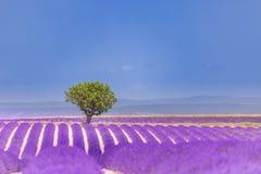 Mooie de zomeraard Het landschap van de de zomerzonsondergang van het lavendelgebied dichtbij Valensole De Provence, Frankrijk royalty-vrije stock afbeelding