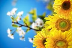 Mooie de zomerachtergrond Royalty-vrije Stock Foto's